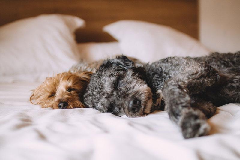 beneficios de dormir con mi perro