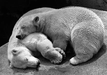 osos-asppen